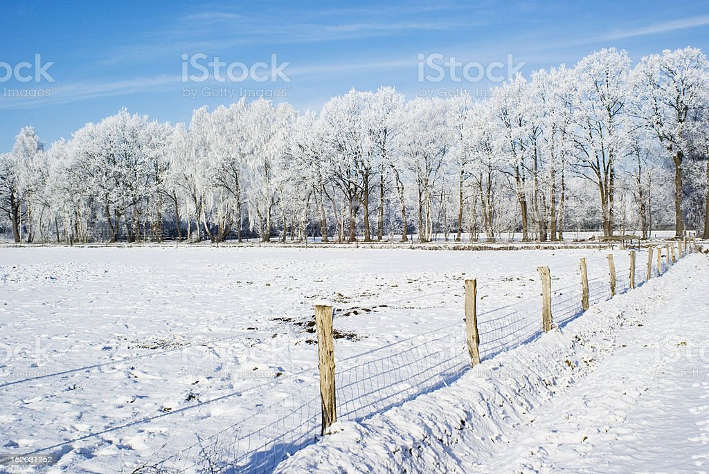 Snowy nature. stock photo
