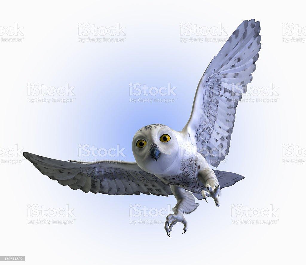Snowy Owl in Flight royalty-free stock photo