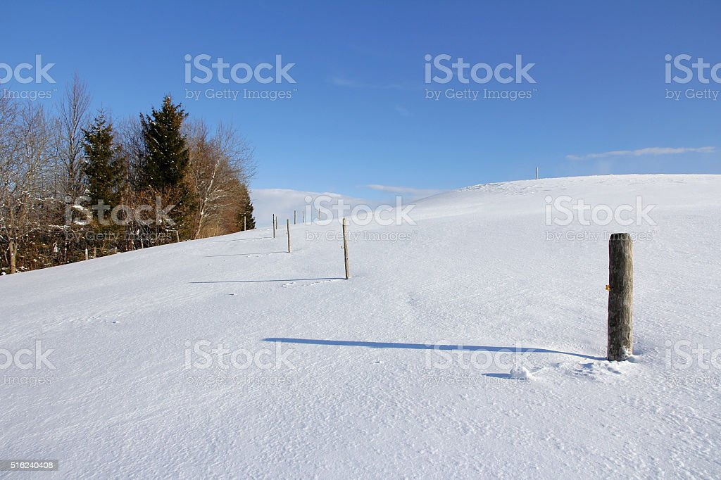 snowy pasture in winter stock photo