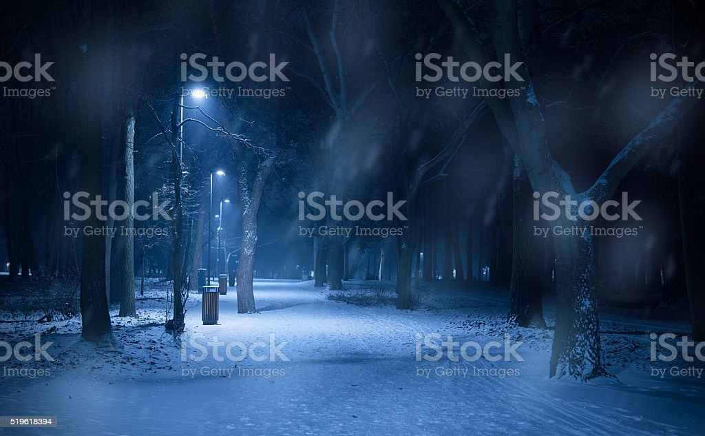 snowy path in the forest at night stock photo