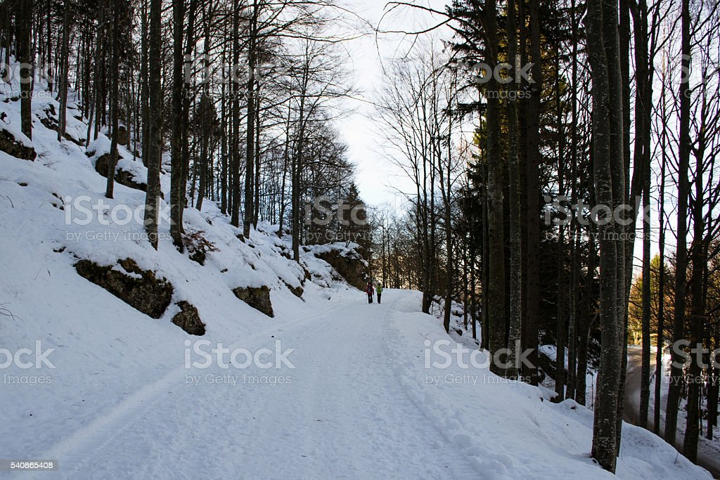 Snowy path in the forest stock photo