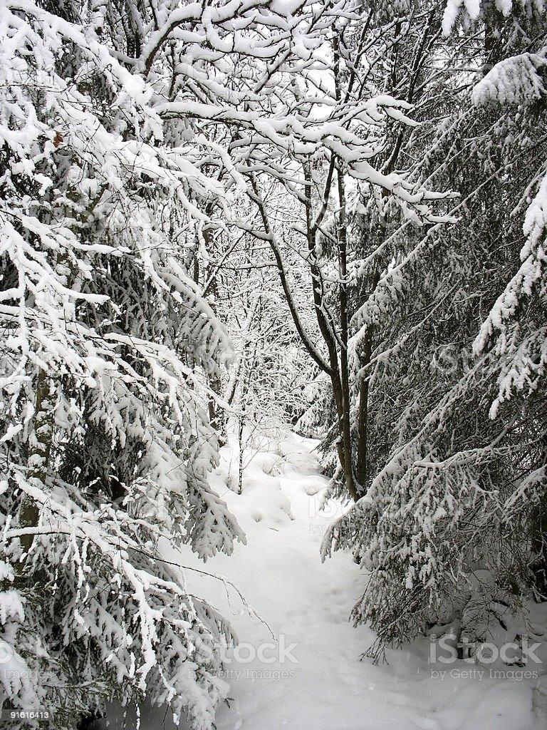 Snowy Path royalty-free stock photo