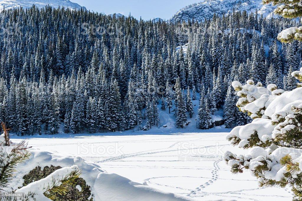 Snowy Pine Trees Border Snow Covered Lake stock photo