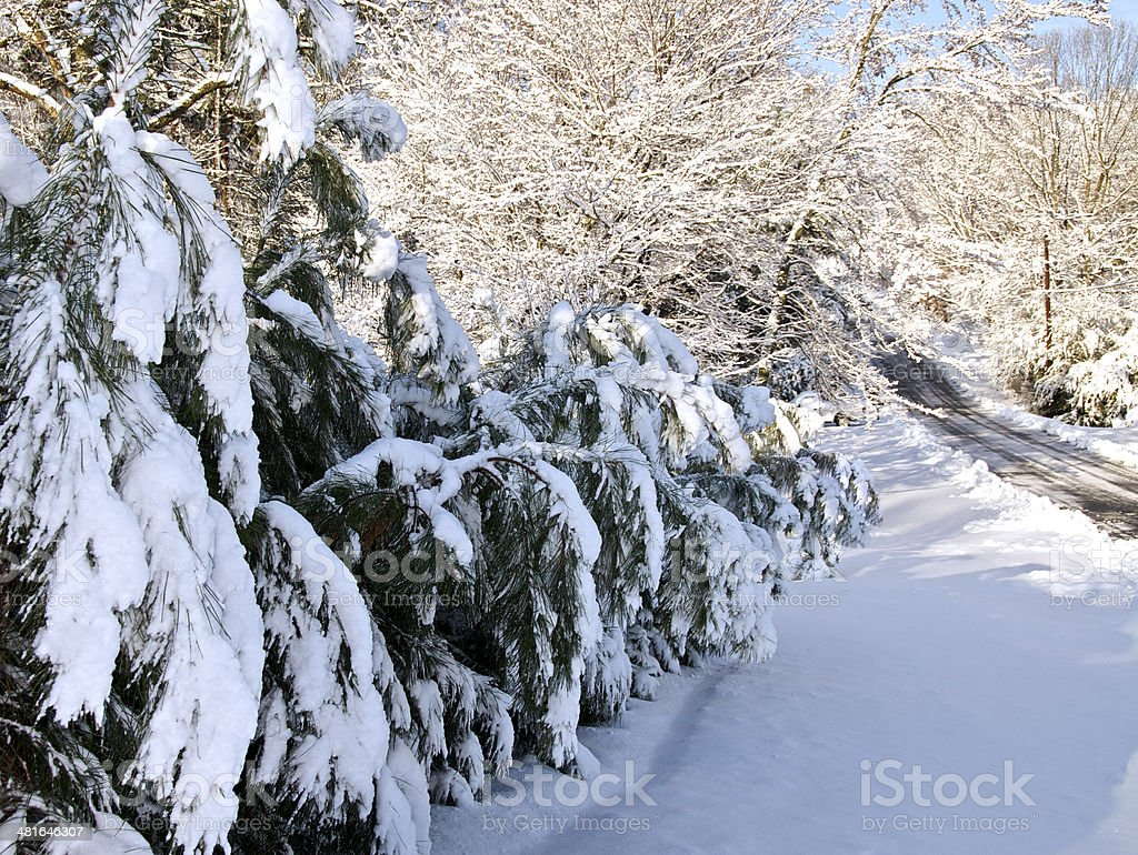Snowy Pines Trees And Country Road stock photo