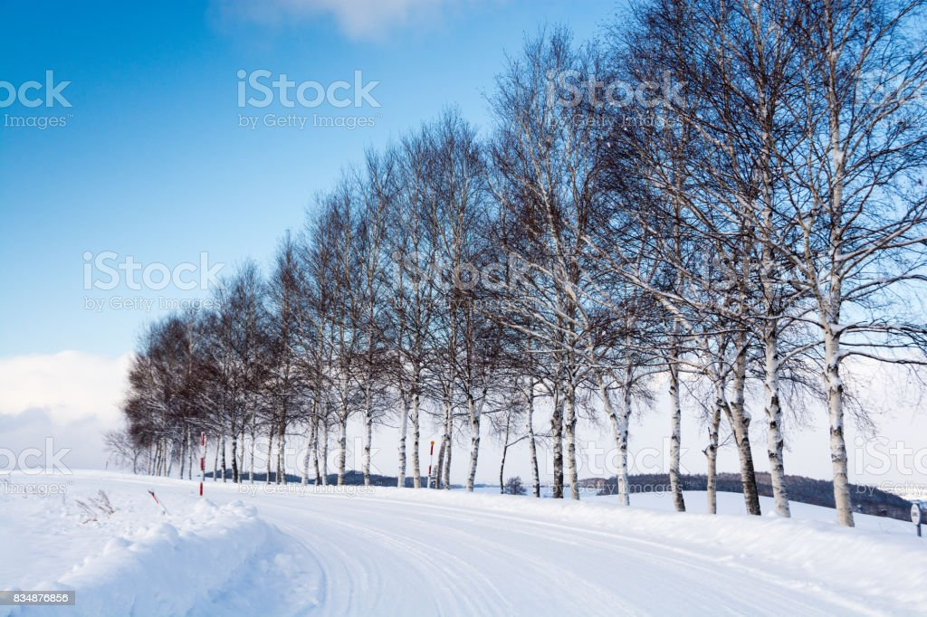Snowy road and birch trees stock photo