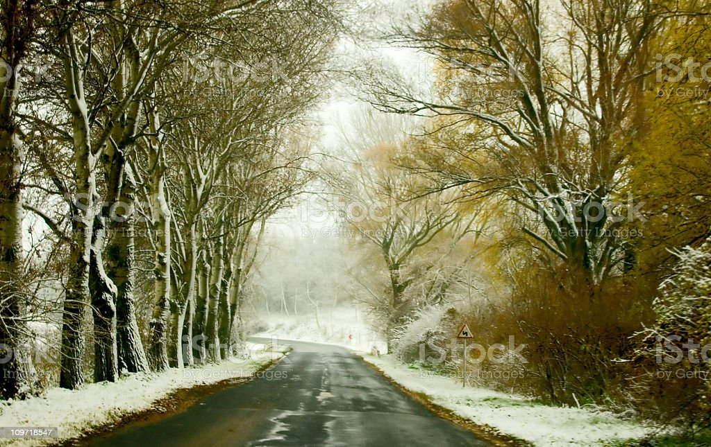Snowy road lined with trees with yellow leaves royalty-free stock photo