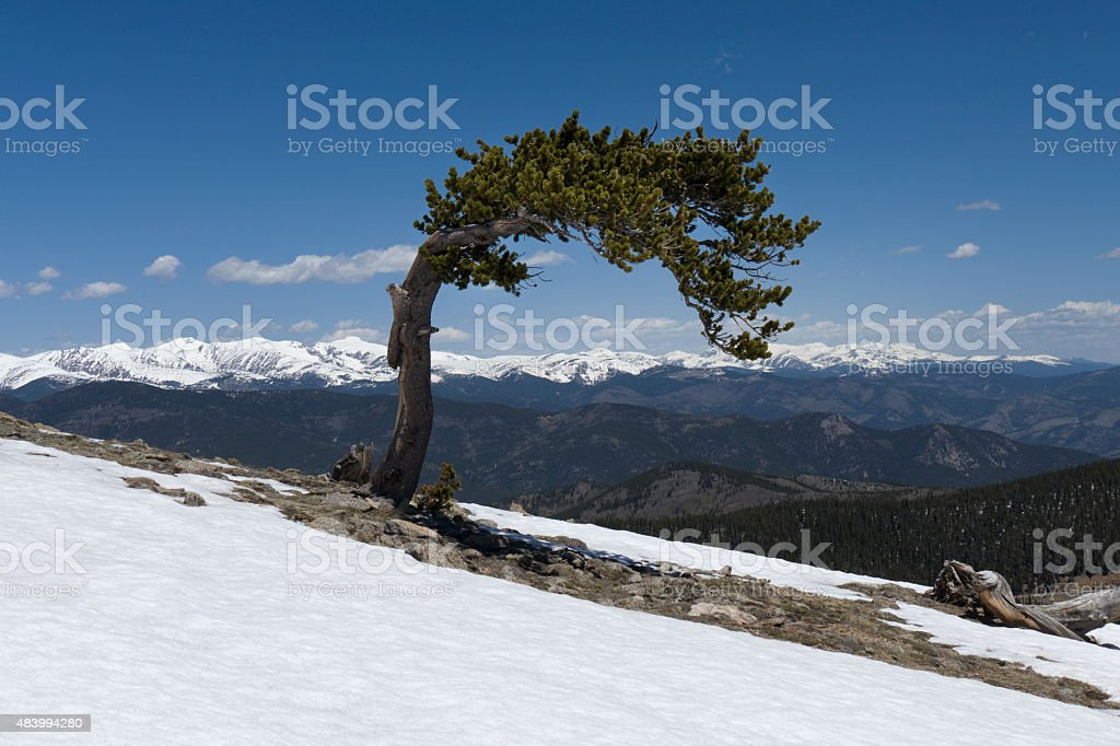 Snowy Rocky Mountains and bristlecone pine Mount Evans Colorado stock photo