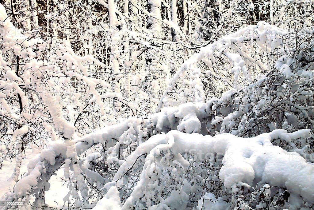 snowy scene stock photo