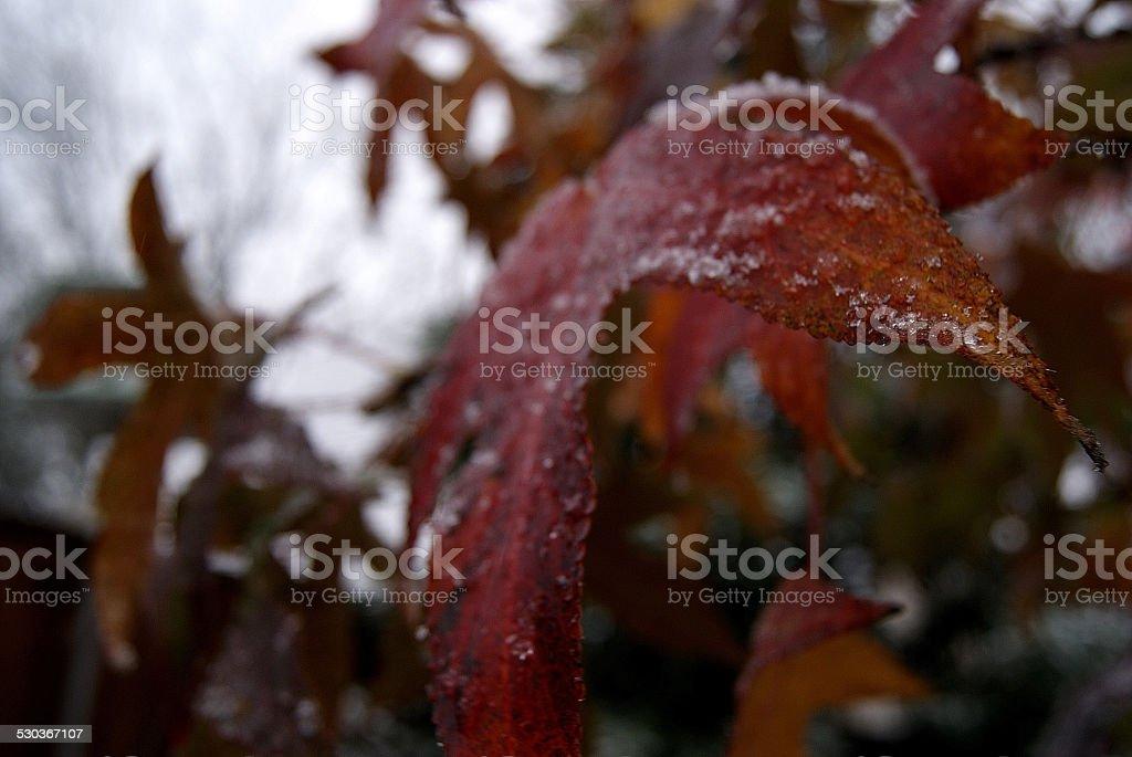 Snowy Thanksgiving royalty-free stock photo