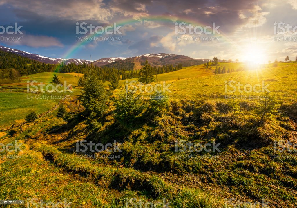 snowy tops of carpathians in springtime at sunset stock photo