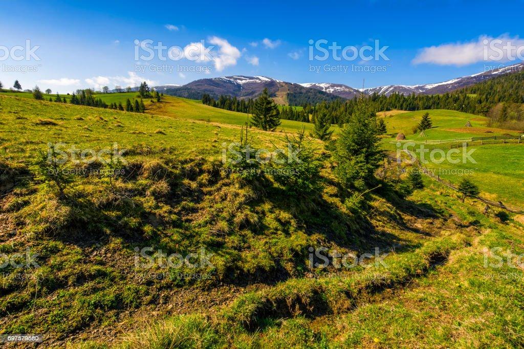 snowy tops of carpathians in springtime stock photo