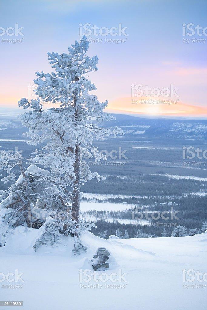 Snowy tree at dawn / winter morning royalty-free stock photo