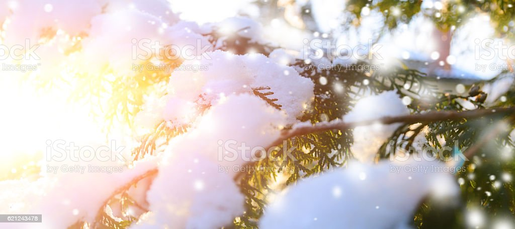 snowy tree branch at sunset stock photo