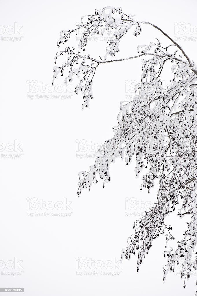 Snowy tree branches against light grey sky stock photo