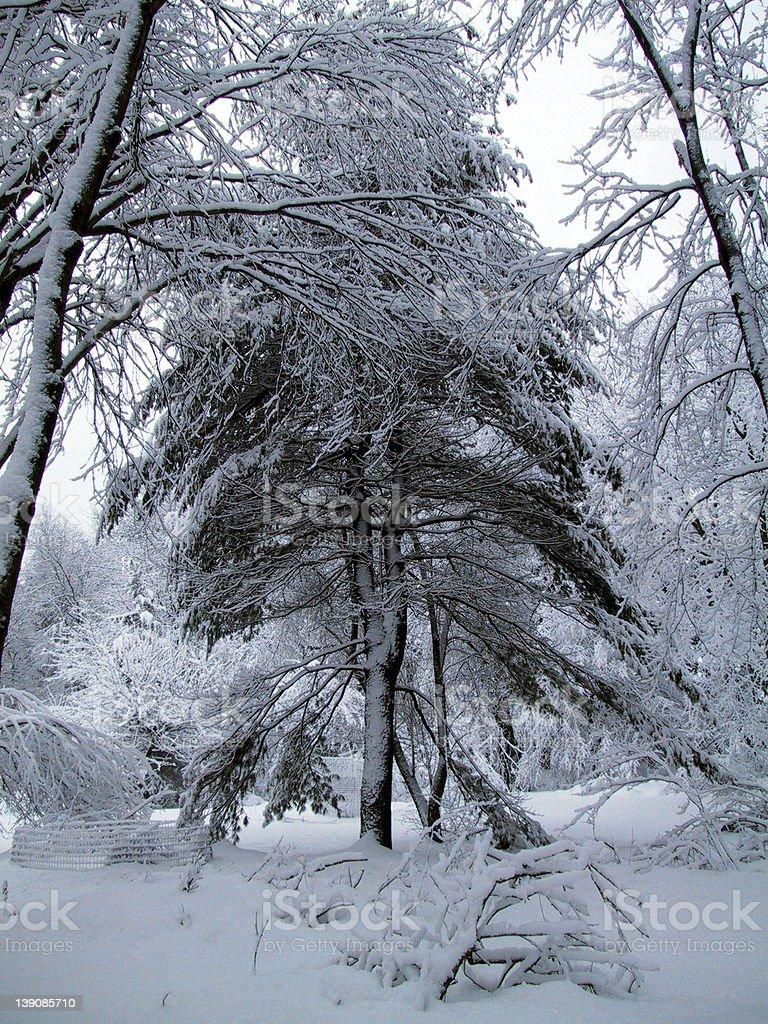 A snowy tree royalty-free stock photo