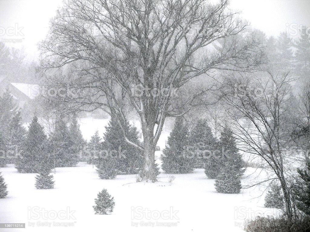 Snowy Tree royalty-free stock photo