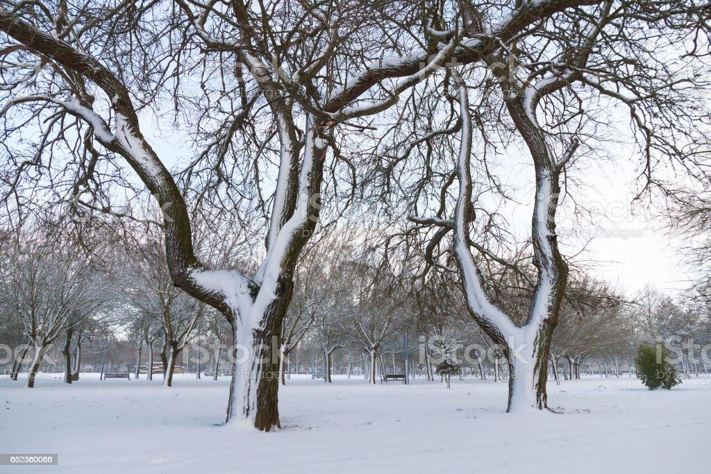 Snowy trees in park - Arboles en Parque Nevado stock photo
