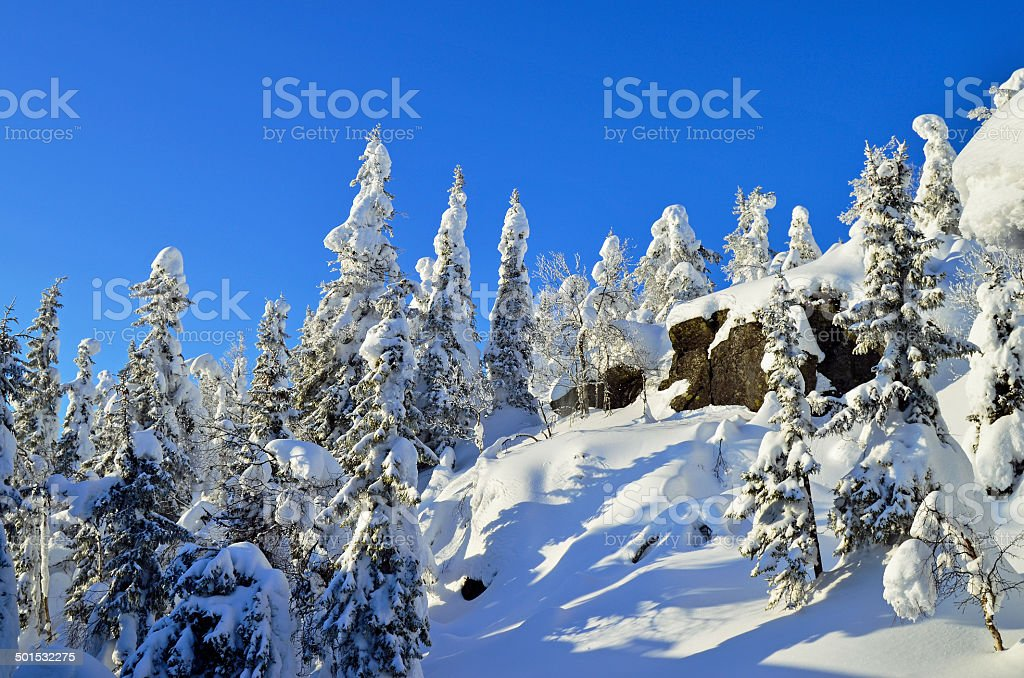 Snowy trees on mountain royalty-free stock photo