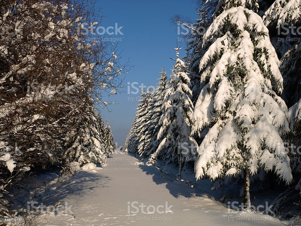 snowy trees royalty-free stock photo