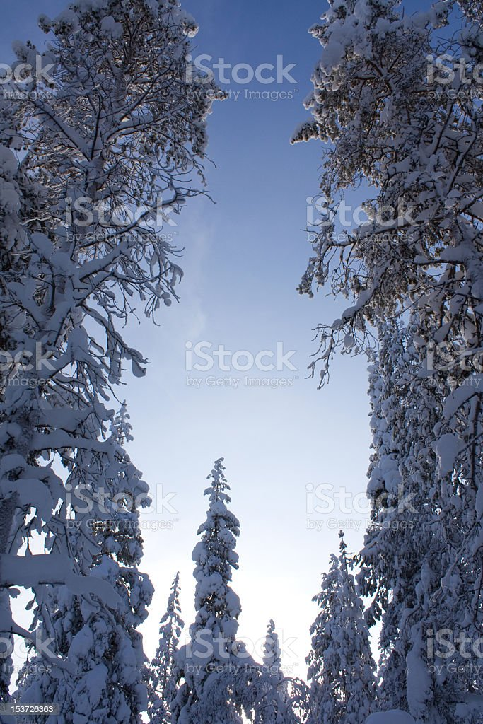 Snowy Trees Under Blue Sky royalty-free stock photo