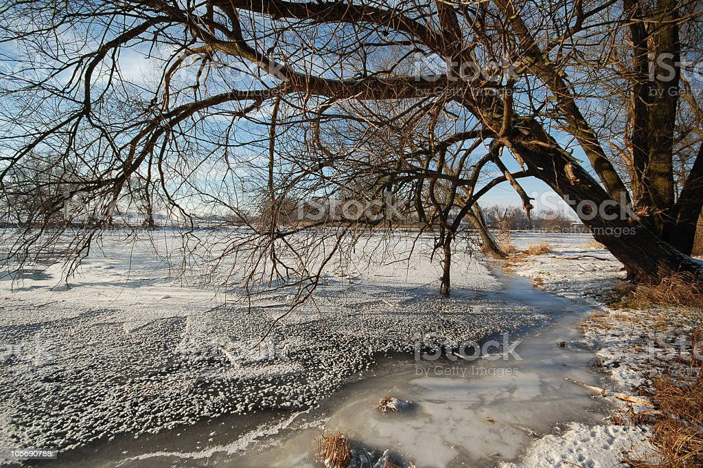 snowy willow tree on havel river stock photo