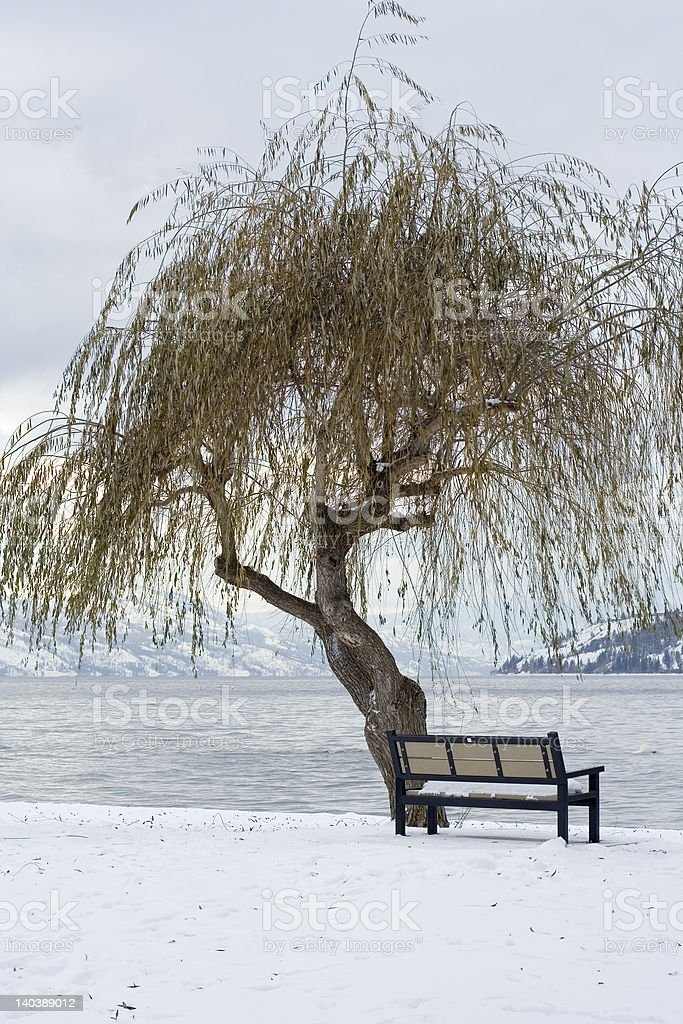 Snowy willow tree on Okanagan Lake royalty-free stock photo