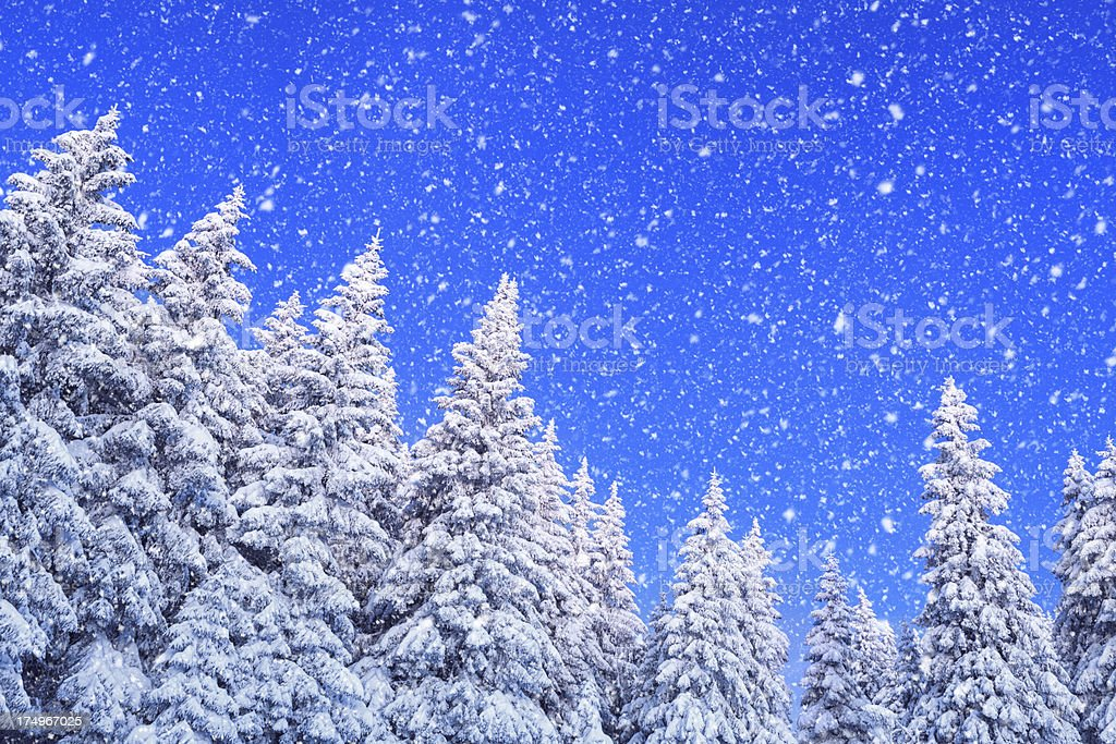 Snowy Winter Day royalty-free stock photo