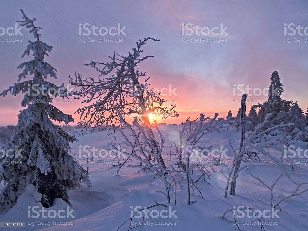 snowy winter forest in the sunset stock photo