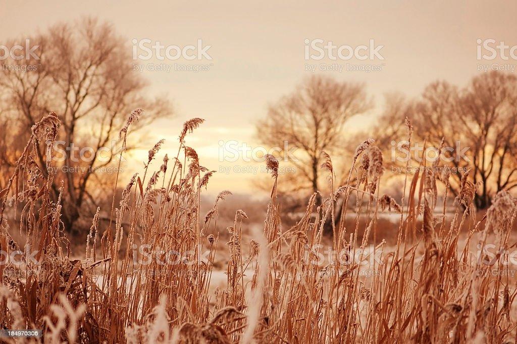 snowy winter landscape at Havel river (Brandenburg Germany) sunset light stock photo