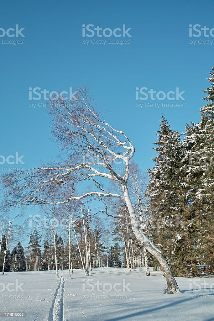 snowy winter landscape with cross country track in Black forest royalty-free stock photo