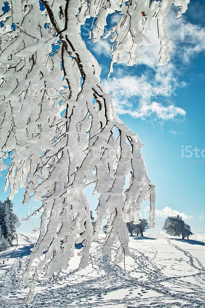 snowy winter landscape with tree and blue sky royalty-free stock photo