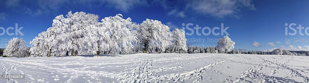 snowy winter panorama landscape with trees at Schauinsland stock photo
