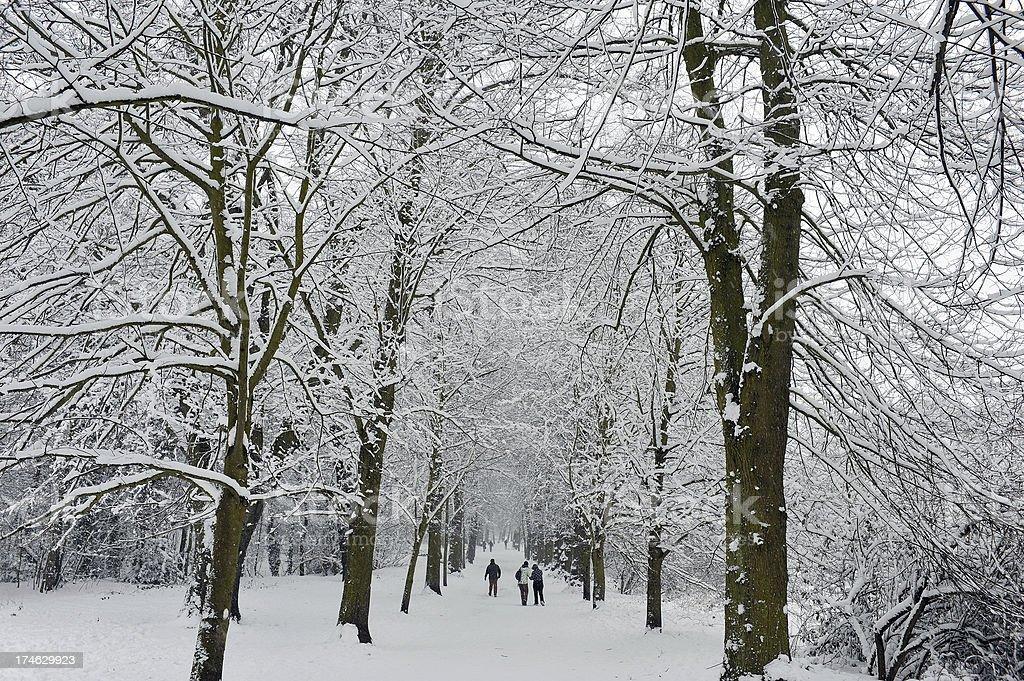 Snowy woodland stock photo