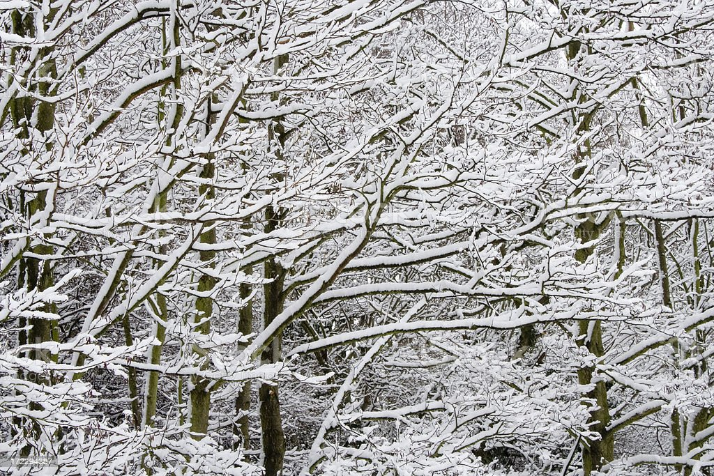 snowy woodland winter scene royalty-free stock photo