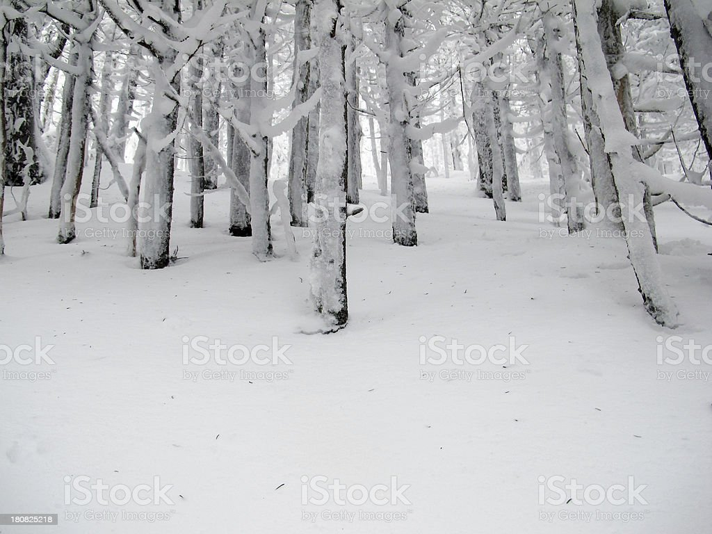 Snowy Woods on Cannon Mountain royalty-free stock photo
