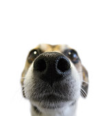 snuffling dog