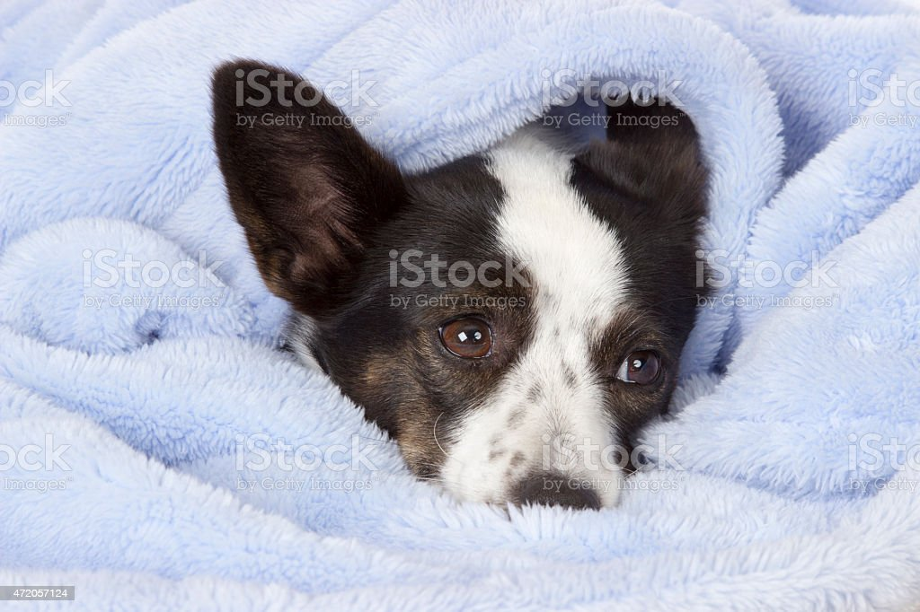 Snuggled Puppy stock photo