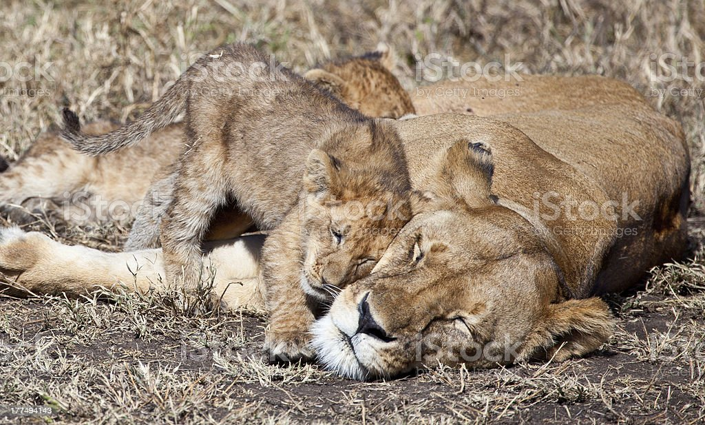 Snuggles royalty-free stock photo