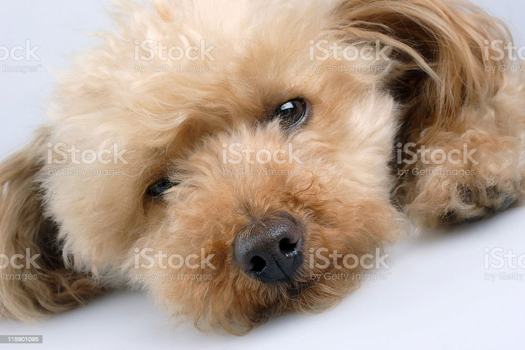 so tired royalty-free stock photo