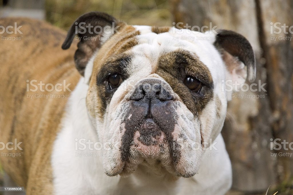 So Ugly She's Cute royalty-free stock photo