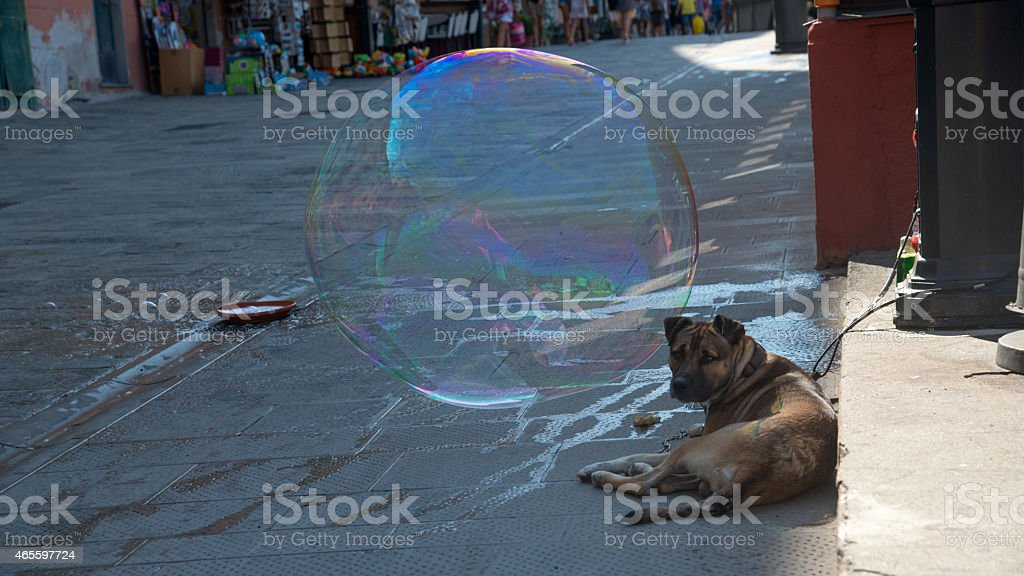 soap bubble with dog royalty-free stock photo