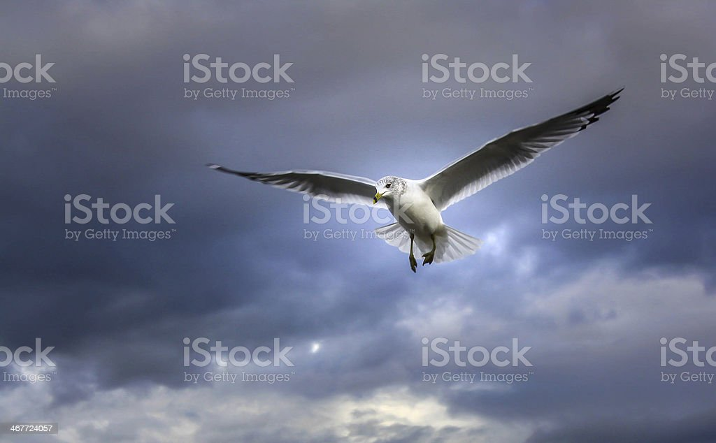 Soaring above royalty-free stock photo