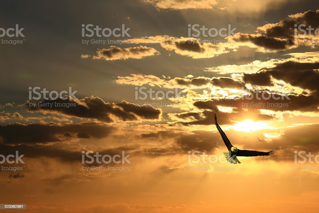 Soaring eagle stock photo