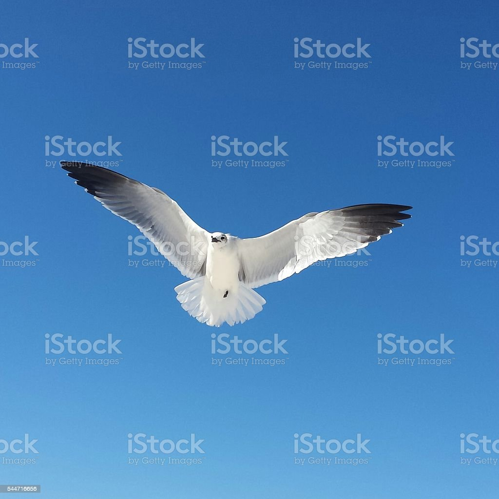 Soaring Seagull High in the Blue Sky stock photo