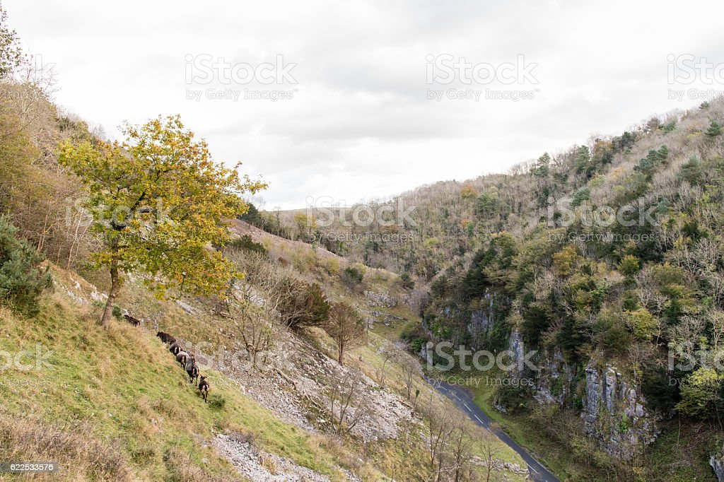 Soay sheep on slopes of Cheddar Gorge stock photo