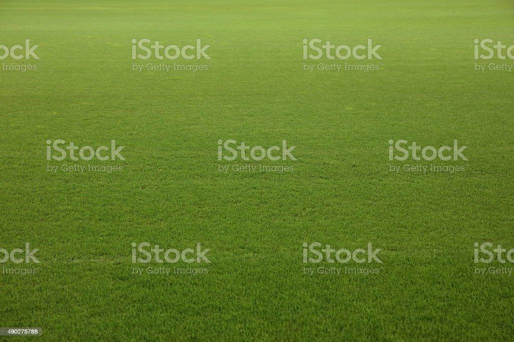 Soccer stadium green grass field stock photo