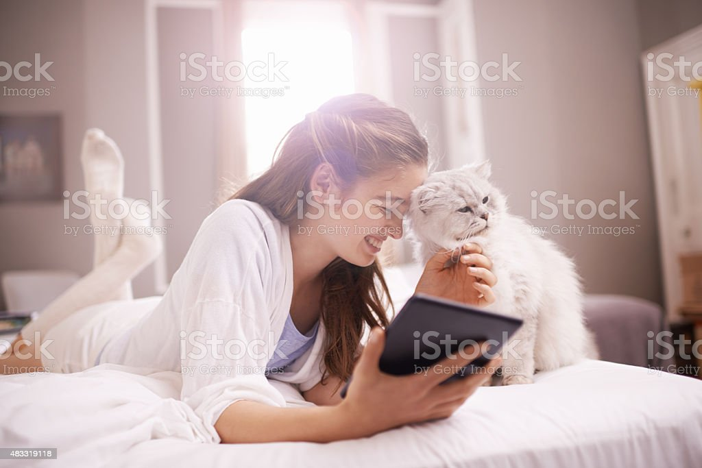 Social media and cats...is there a better combo? stock photo