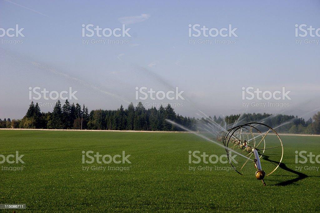 sod farm watering (landscape) royalty-free stock photo