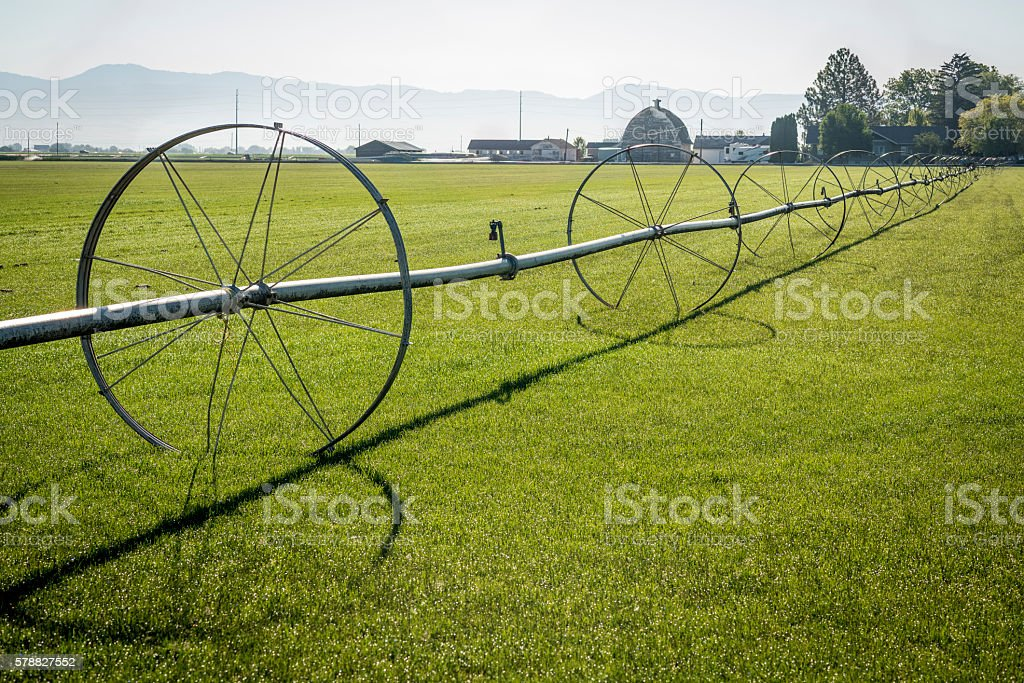 Sod field and irrigation sprinkler stock photo