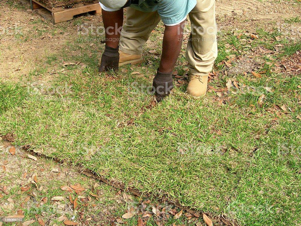 Sodding a Lawn royalty-free stock photo